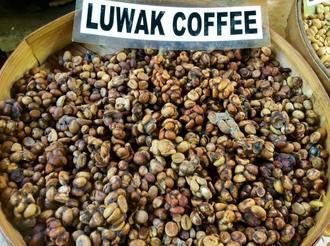 قیمت عمده دانه قهوه کوپی لواک