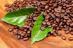 فروش اینترنتی دانه قهوه ارگانیک