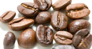 بهترین دانه قهوه روبوستا هند