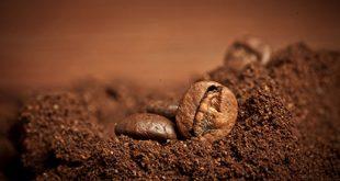 پودر قهوه ویتنام