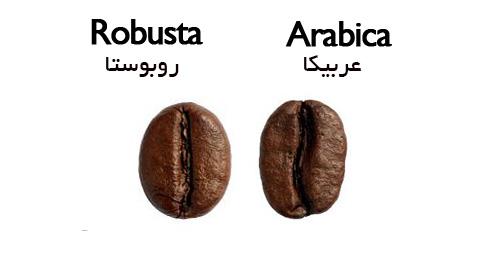 انواع قهوه روبوستا