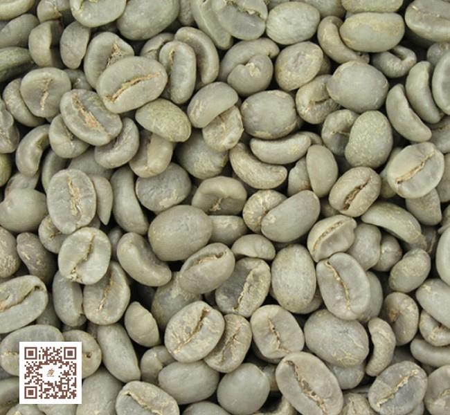 فروش قهوه سبز