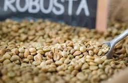 بهترین قهوه robusta