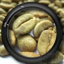 قیمت انواع دانه قهوه سبز فله ای