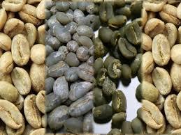قیمت عمده قهوه سبز ویتنام