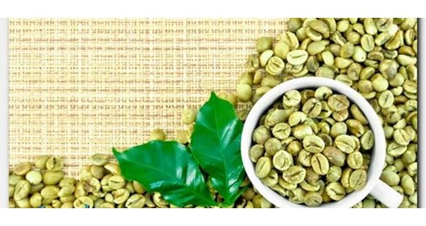 قیمت واقعی قهوه سبز در نمایندگی
