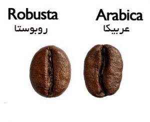 عرضه قهوه سبز عربیکا با شرایط ویژه