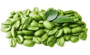 عرضه قهوه سبز عربیکا