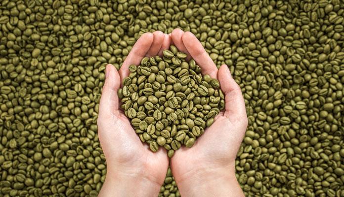 مراکز پخش دانه قهوه سبز