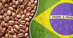 خرید قهوه برزیل